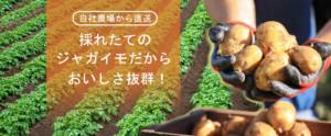ゴウちゃんのコロッケ屋 ジャガイモ